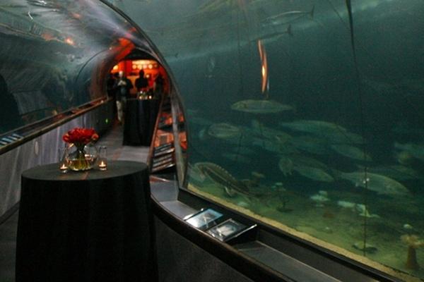 Photo of San Francisco event space venue Aquarium of the Bay