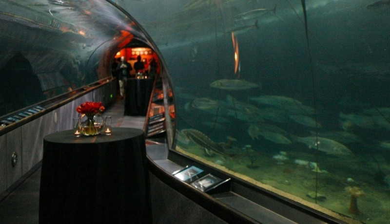 Photo of San Francisco event space venue Aquarium of the Bay