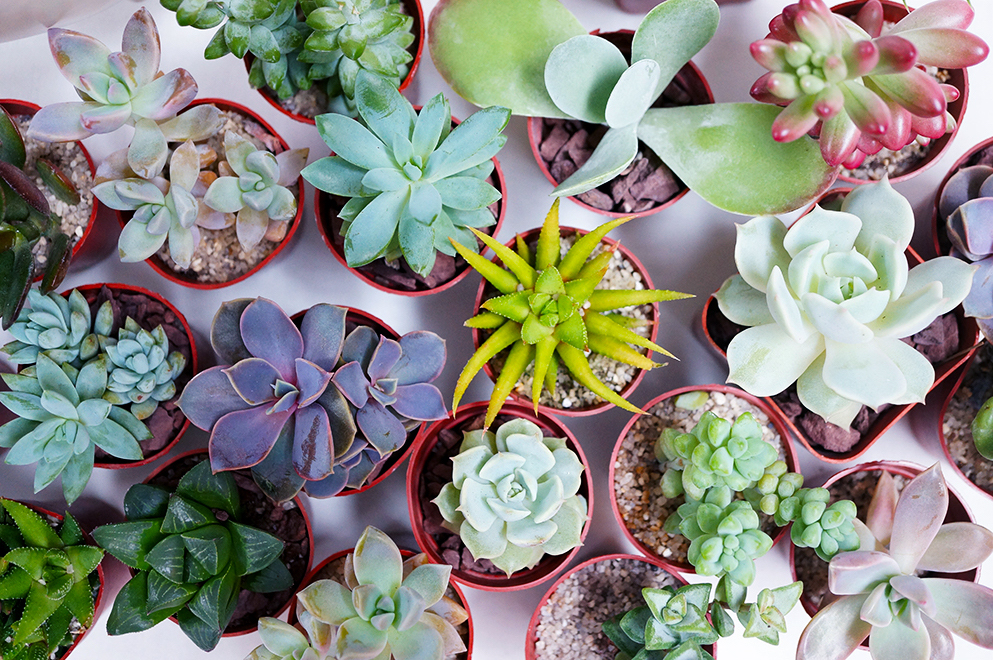 Photo of Experience: SUCCULENT GARDEN WORKSHOP